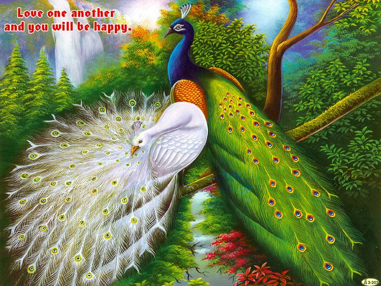 peacock-poster-DM84_l