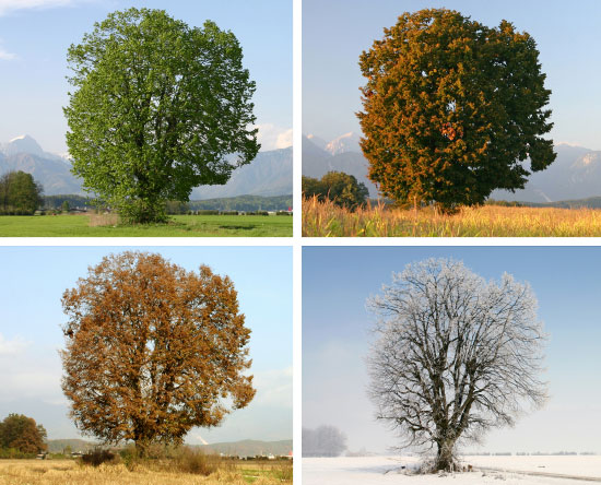 changing-seasons2