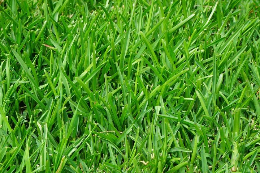 grass-375586_960_720